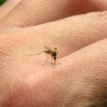 Fiocruz: epidemias de zika e chikungunya serão mais fortes em 2017